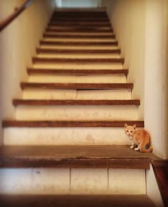宮古島 southern fox